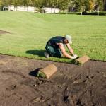 Укладка рулонного газона: цена